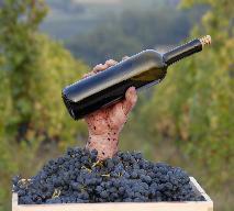 Jak zrobić wino z winogron bez drożdży?