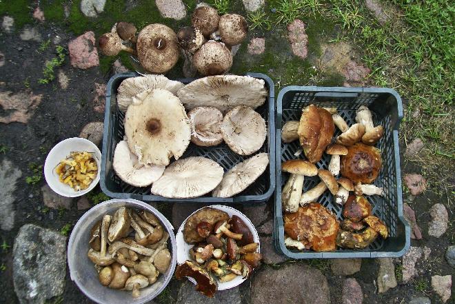 Jakie są wartości odżywcze grzybów?